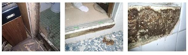 お風呂場の入り口にシロアリの巣