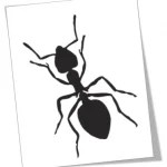 free-ant-clipart-3