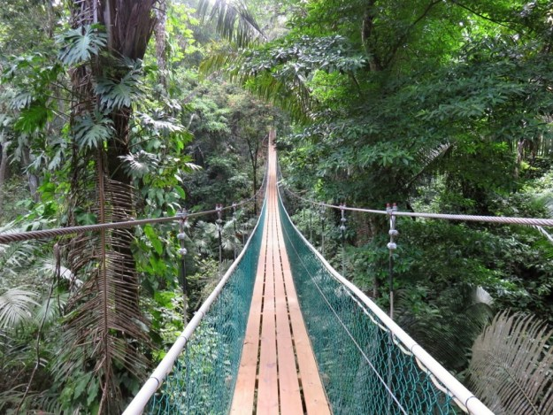 Rope Bridge - Belize Adventure Tour - SanPedroscoop
