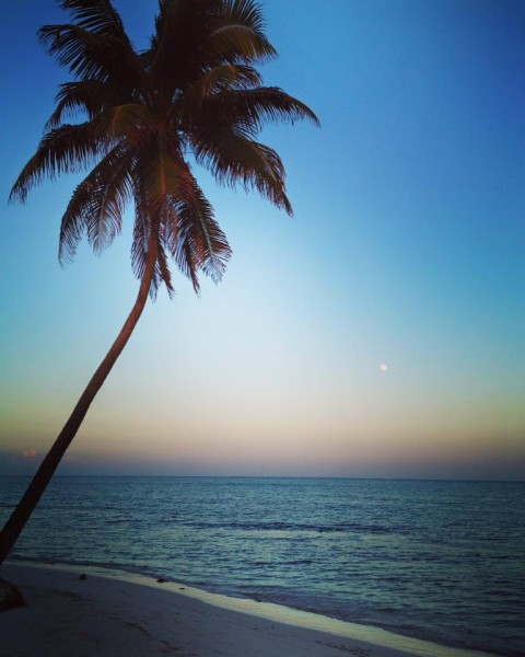Official Tree: Coconut - this photo taken last night outside my condo
