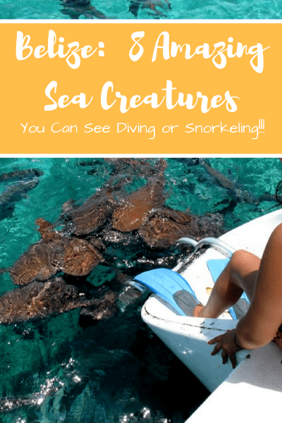 8 AMAZING sea creatures you can find Diving or Snorkeling in BELIZE