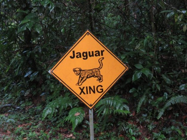 jaguar-crossing