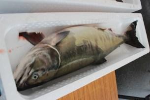 志津川湾鮭・いくらまつり