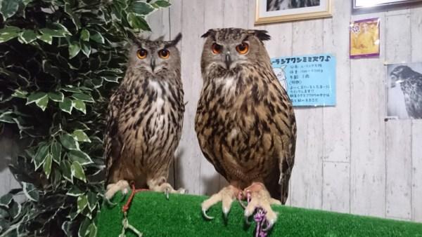 明日は『動物ふれあいイベント』開催!