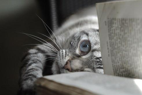Reading Don Quijote