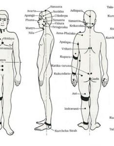 Yagyavalkya points also the secrets of marmas vital human body rh sanskritimagazine