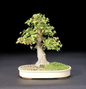 Read more about the article 2012 Bonsai Show