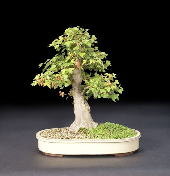 You are currently viewing 2012 Bonsai Show