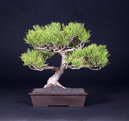 You are currently viewing 2009 Bonsai Show