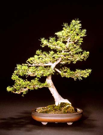 Read more about the article 2005 Bonsai Show