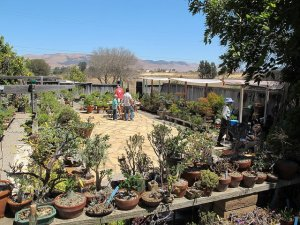 Ann and John's backyard