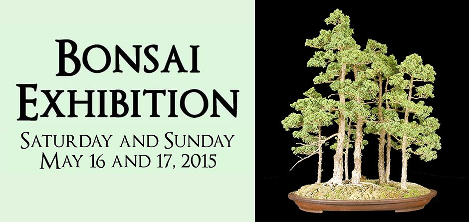You are currently viewing SB Bonsai Club Exhibition – 2015
