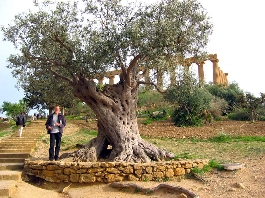 Read more about the article April 2019 – Ancient Olives and More