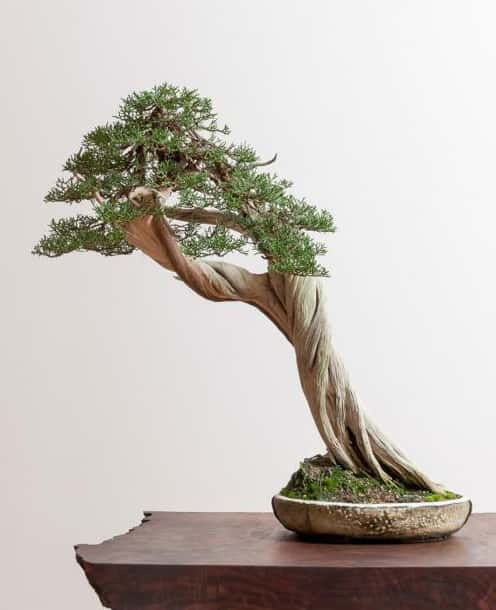 October 2019 The Good The Bad And The Unusual Bonsai Club Of Santa Barbara