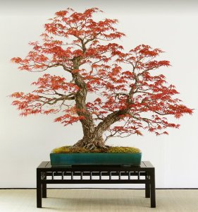 Read more about the article SERGIO CUAN – DECIDUOUS TREE DESIGN