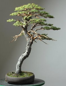 Read more about the article Cypress Trees