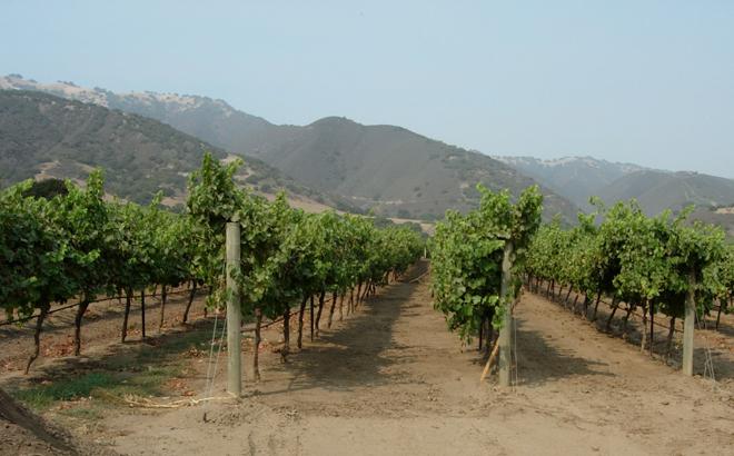 Wine Country Tour | Lifestyle Tour | Santa Barbara
