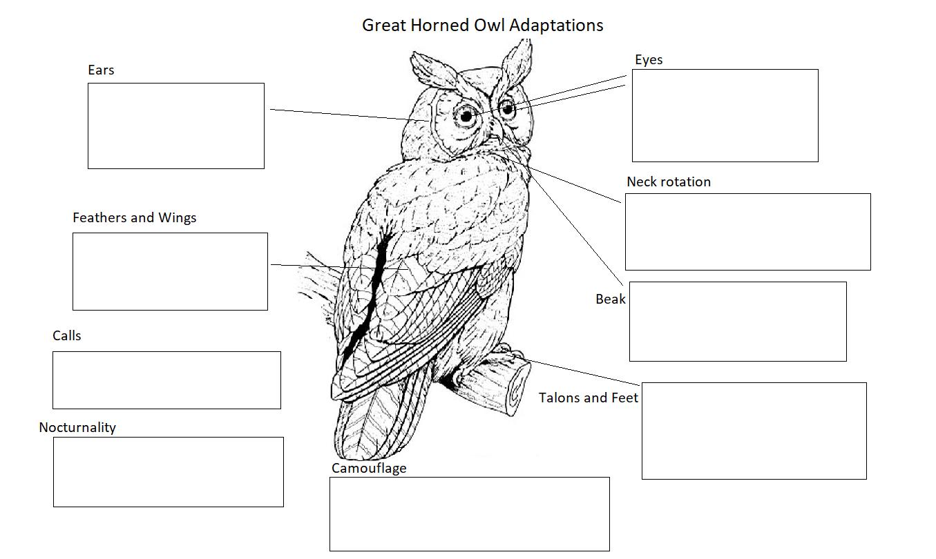 Resources For Teachers Santa Cruz Museum Of Natural History