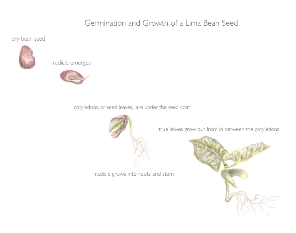 On The Subject Of Seeds