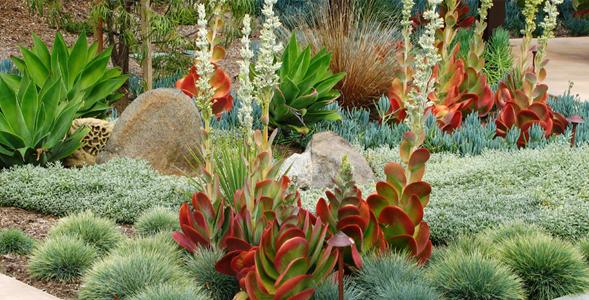 drought tolerant landscape rebates