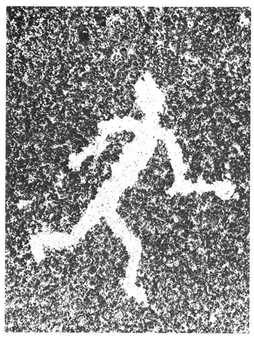 petroglyph runner