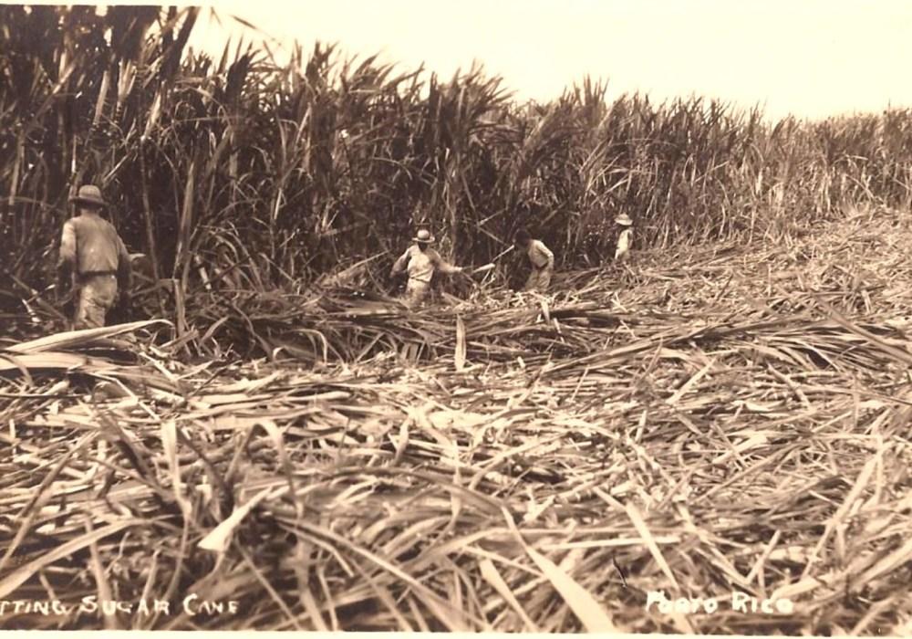 La caña de azúcar en Santa Isabel