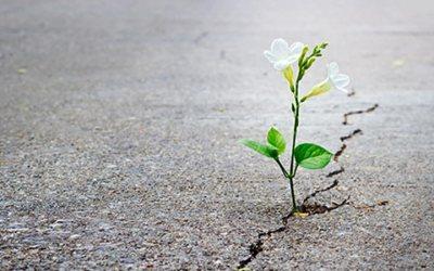 Esperança em tempos de dificuldade