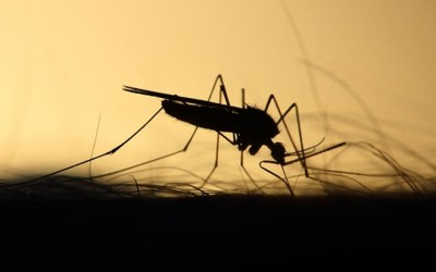 Casos prováveis de dengue passam de 500 em Itaúna