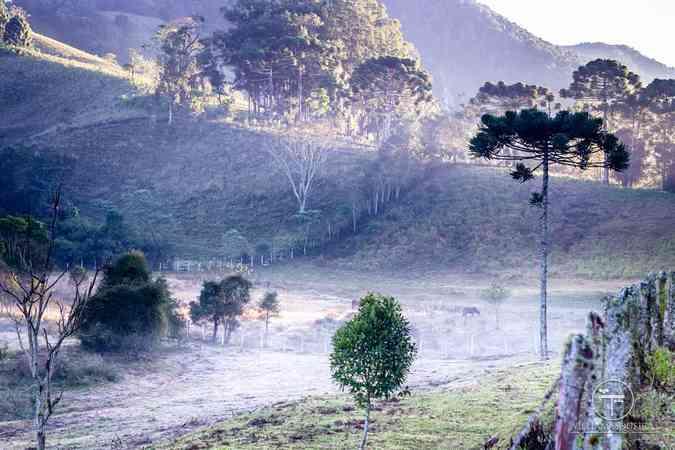 Frio bate recorde e faz gear no Sul de Minas