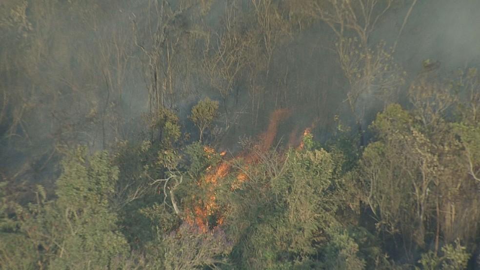 Bombeiros de MG registram mais de 2 mil incêndios florestais
