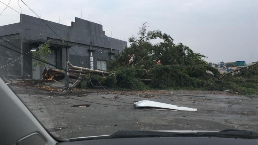 Tempestade causa estragos e deixa parte de Divinópolis sem energia
