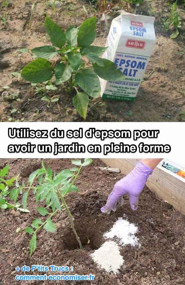 utiliser-sel-epsom-pour-terre-jardin