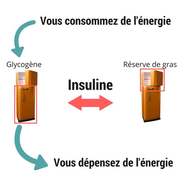 Mécanisme de prise de gras- Santé d'Acier- Santé d'Acier