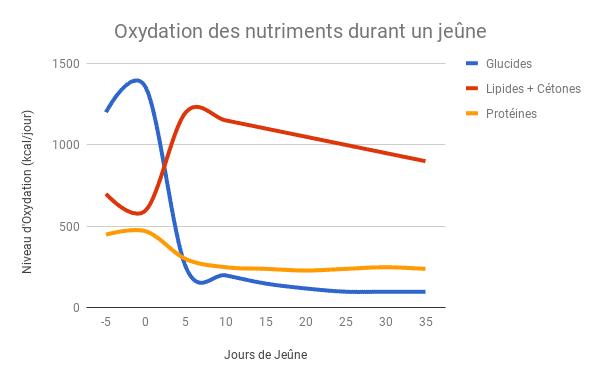 Oxydation des protéines durant le jeûne - Santé d'Acier