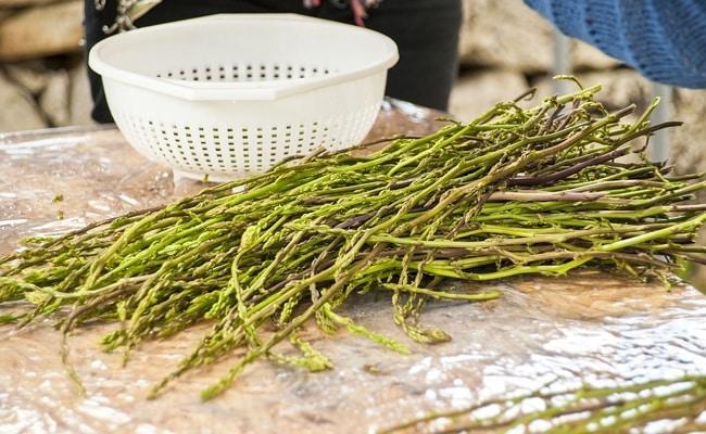 Deux des meilleurs remèdes naturels pour mettre fin à l'endométriose (racine de pissenlit et asperges sauvages)