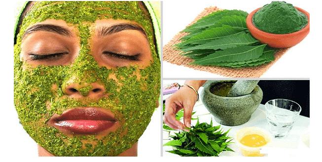 Avantages des feuilles de Neem, de l'huile, et du savon de Neem pour la peau