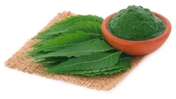 Comment utiliser les feuilles de neem comme traitement naturel du VIH