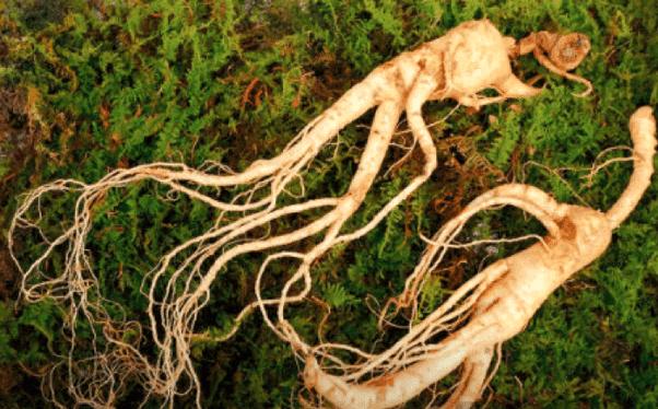 Quelles herbes africaines peuvent augmenter la taille du pénis et où peut-on les trouver?