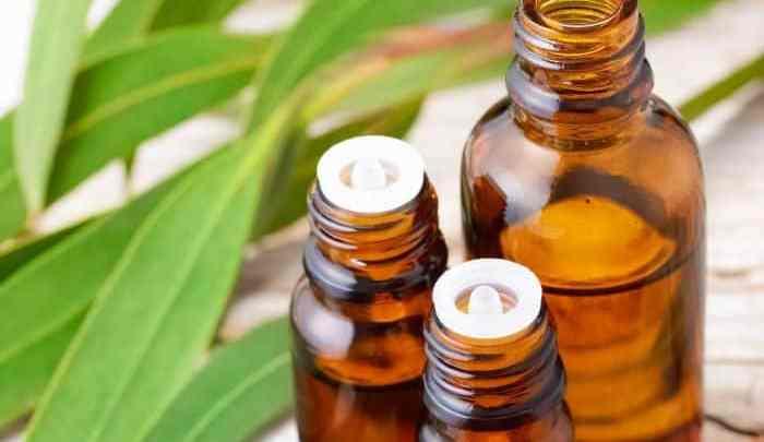 Comment utiliser l'huile d'eucalyptus pour mettre fin au ronflement cette nuit