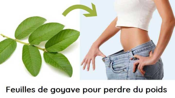 Comment utiliser les feuilles de goyave pour perdre du poids