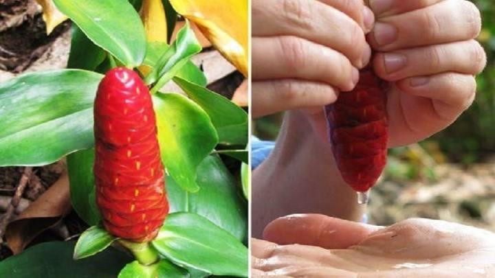 Un remède à base de plantes pour le cancer du col utérin