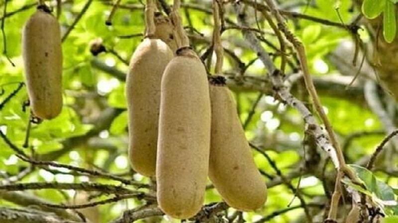 102 plantes utilisées dans le traitement des fibromes