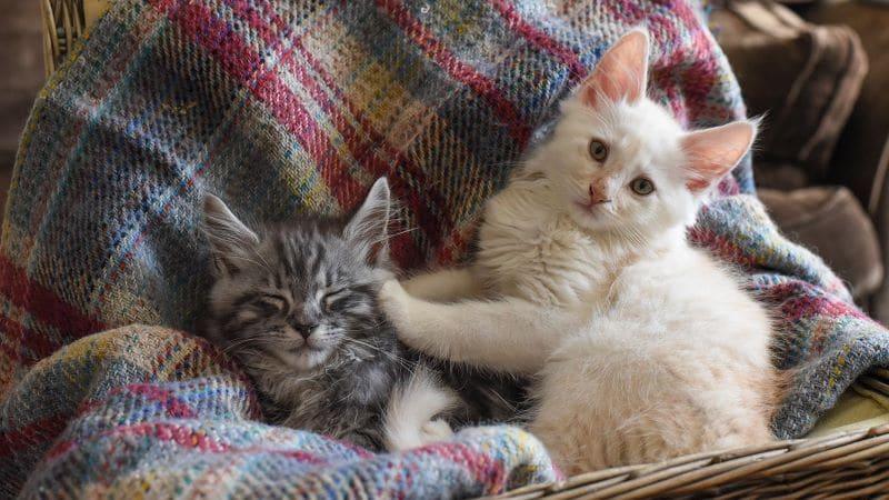 Soins des chatons: conseils incontournables pour élever des chatons
