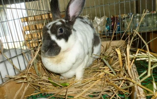 Lapinerie : Comment démarrer un élevage de lapins rentable