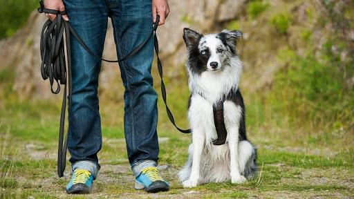 Comment dresser votre chien à ne pas attaquer les étrangers