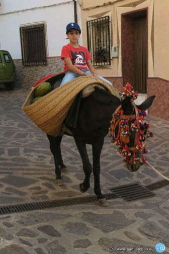 Mulillas, recogida del trigo 2017