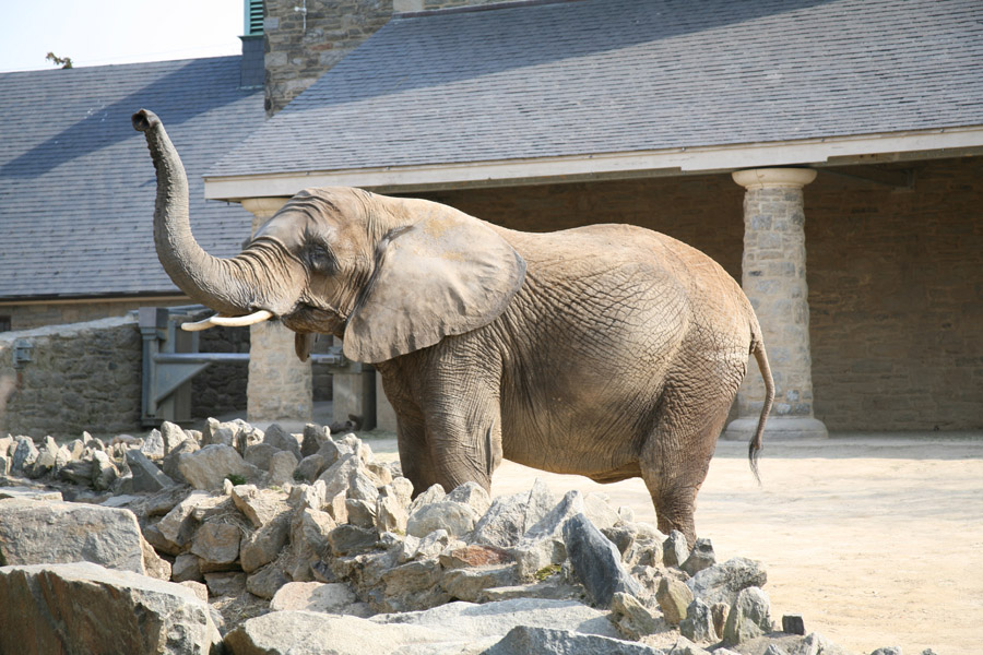 My elepant picture from the zoo