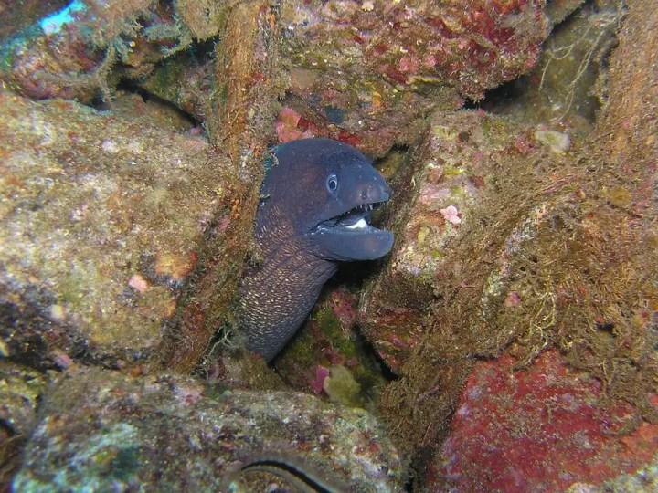 Langouste plongée à Santorin