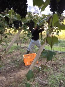 2015.10.3R-1収穫 (1)