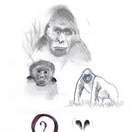 Il gorilla di montagna, disegno senza firma